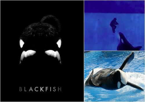 Blackfish Documentary